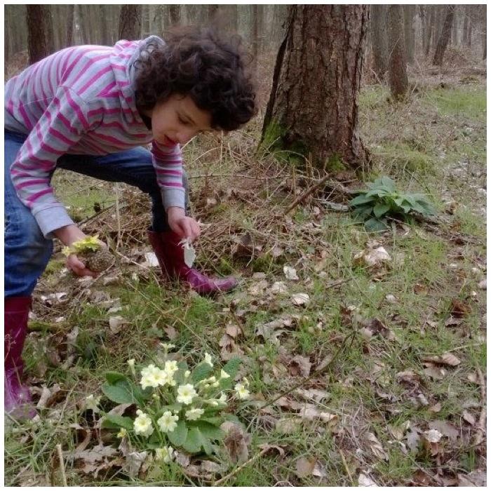 Primrose & Foxglove leaves