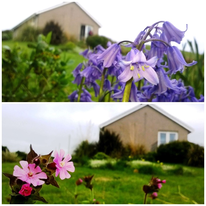 Tina's garden - Bluebells and Red Campion