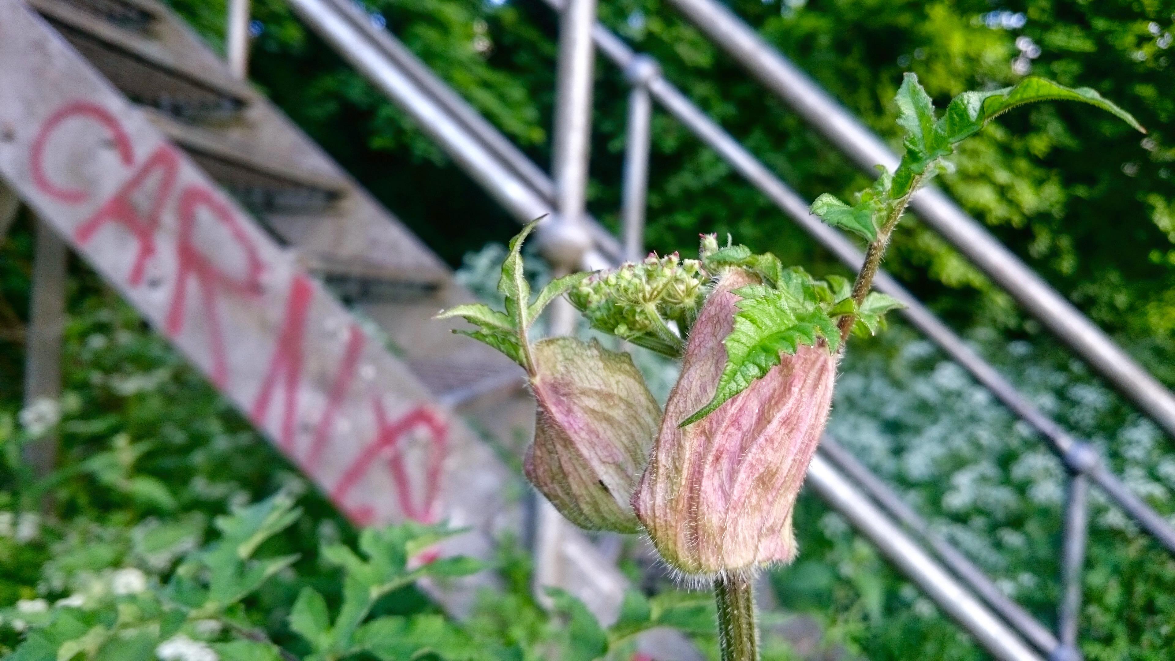 Photo 03-06-2015 19 47 59